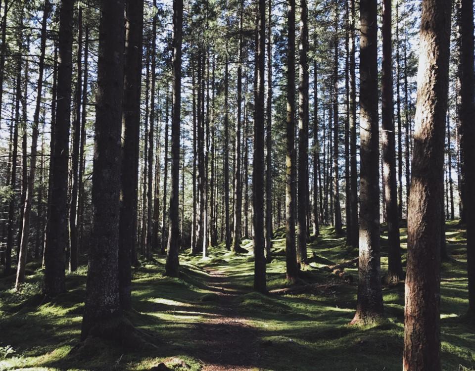 Transformation forest